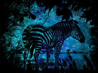 cosmic zebra by bossyboots