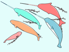 Narwhal Family T-Shirt Design by