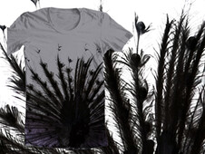 Tail Feathers T-Shirt Design by