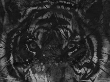 Tiger look T-Shirt Design by
