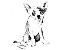Chihuahua T-Shirt Design by
