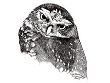 An Owl T-Shirt Design by