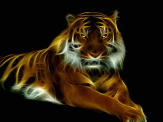 Tiger by basher1995