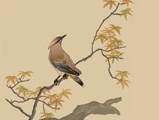 Waxwing T-Shirt Design by