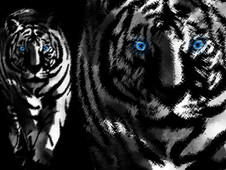 white tiger in art T-Shirt Design by