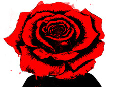 Red Rose T-Shirt Design by