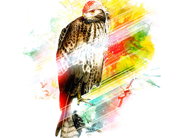 Color Hawk