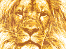 The lion in me T-Shirt Design by