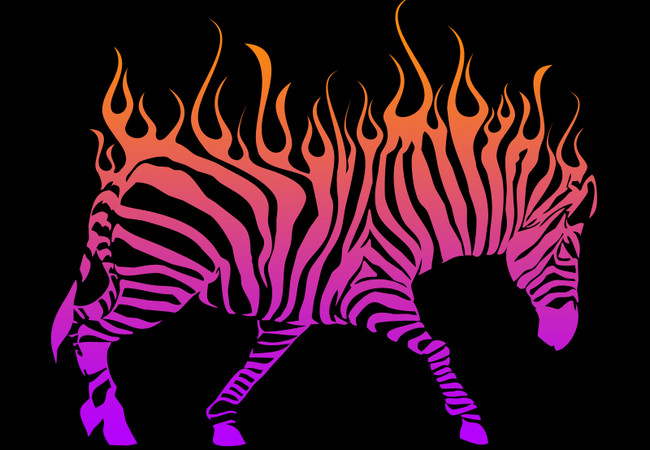 Flaming Zebra