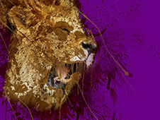 rOAR T-Shirt Design by