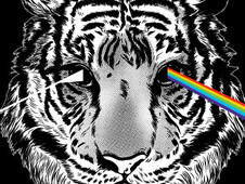 The Darkside Of Tiger T-Shirt Design by