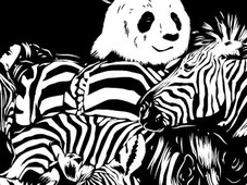 Lost In Zebra T-Shirt Design by