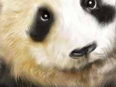 One Cuddly Panda T-Shirt Design by
