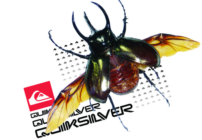 Quicksilver-Beetle