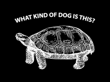 What Type of Dog is This? T-Shirt Design by