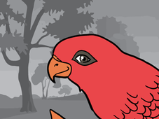 Free Like Red Lory T-Shirt Design by