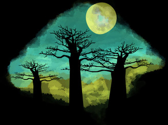 Madagascar Baobab Trees by graphicult