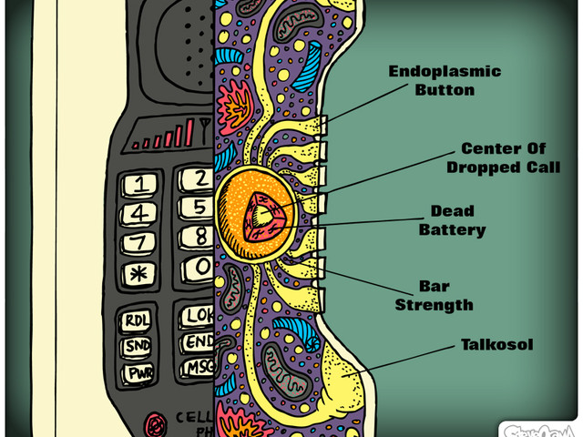 Cellular Technology Diagram