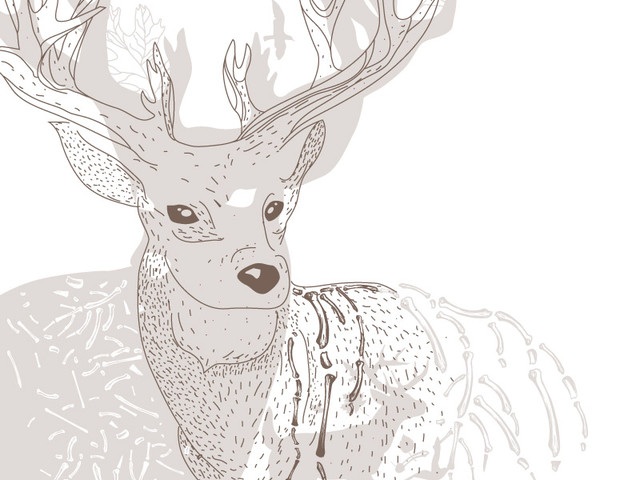 Another Deer