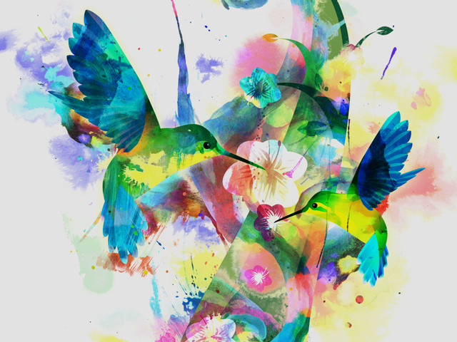 Hummingbird Remix