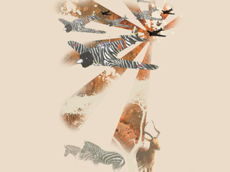 zebra zero by 21september