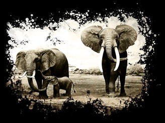 Abstract Elephants family by JMSSaramago