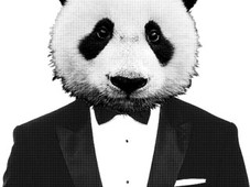 Mr. Panda. T-Shirt Design by