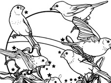 Birds and Stars T-Shirt Design by