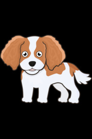 Cute cavalier king charles spaniel (Blenheim)