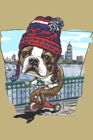 Boston Terrier Wicked Pissah Tricycle Adventure