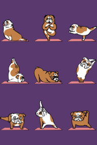 English Bulldog Yoga