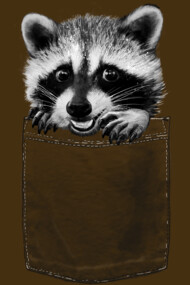 pocket raccoon