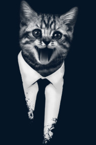 Suit Up cat