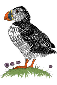 The Puffin - In colour!