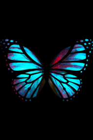 Blue Red Butterfly