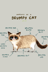 Anatomy of a Grumpy Cat