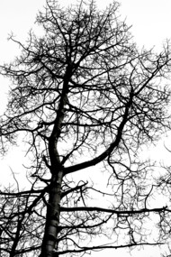 abstract winter tree invert
