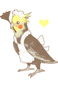 Cockatiel Maid