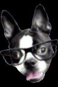 Pop Art Boston Terrier